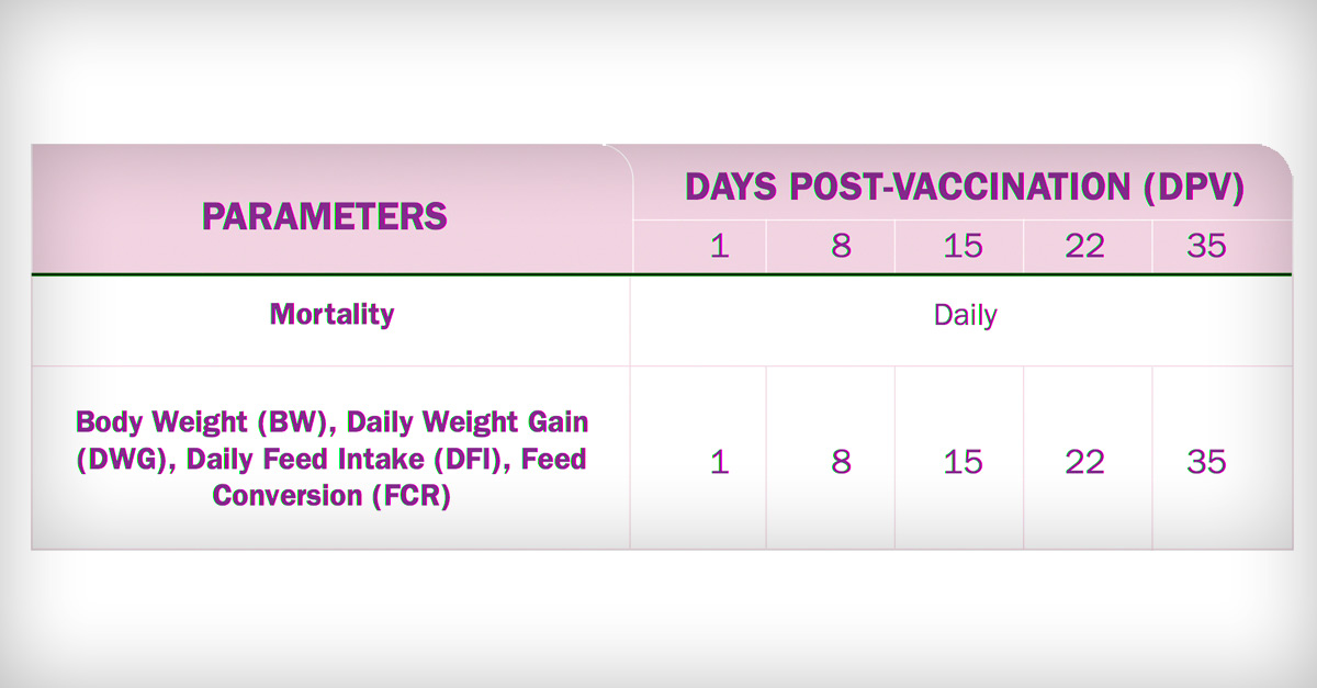 timetable of mortality in broilers per day post-vaccination