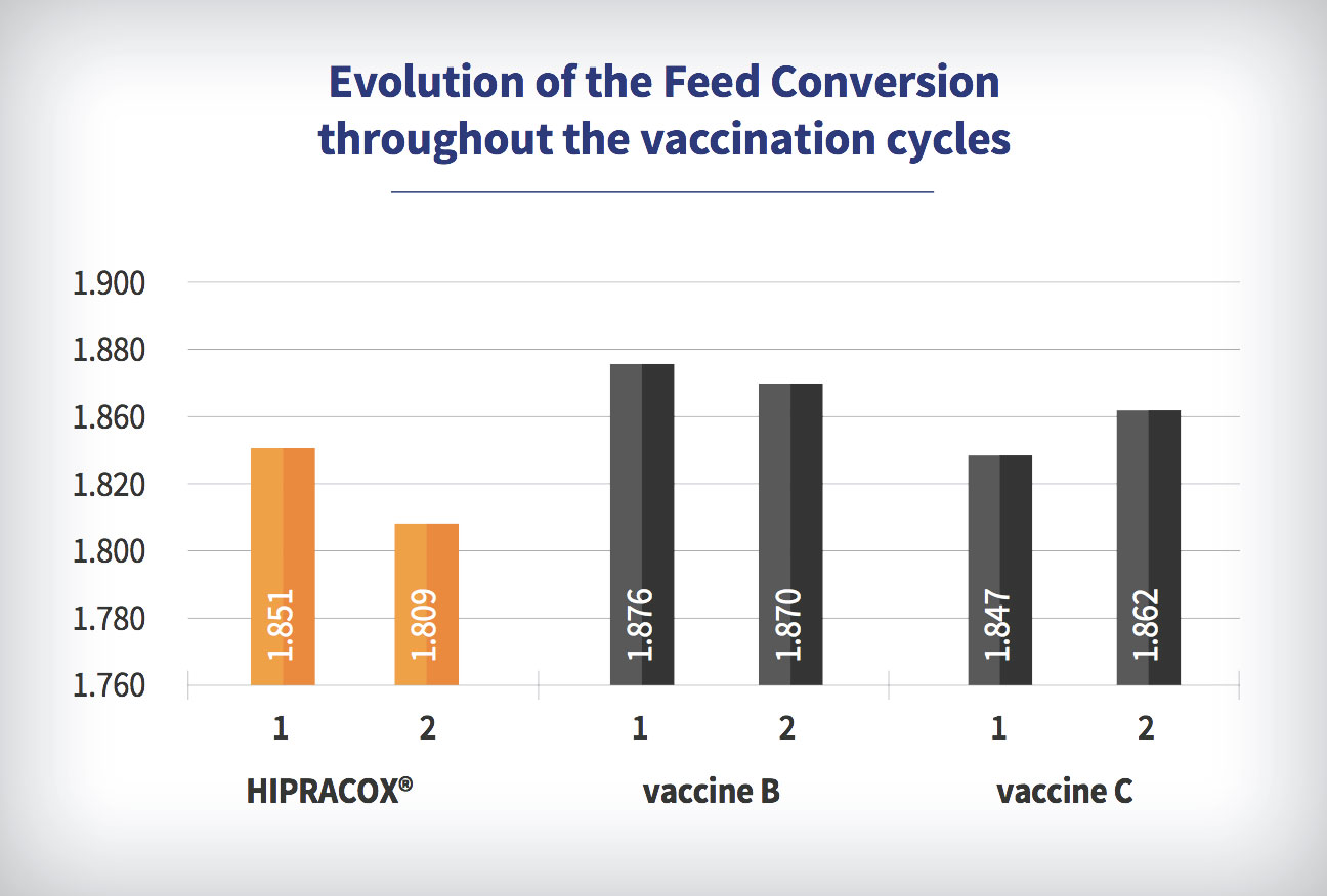 Coccidiosis in chickens, Brasil: Evolution of the Feed Conversion throughout the vaccination cycles