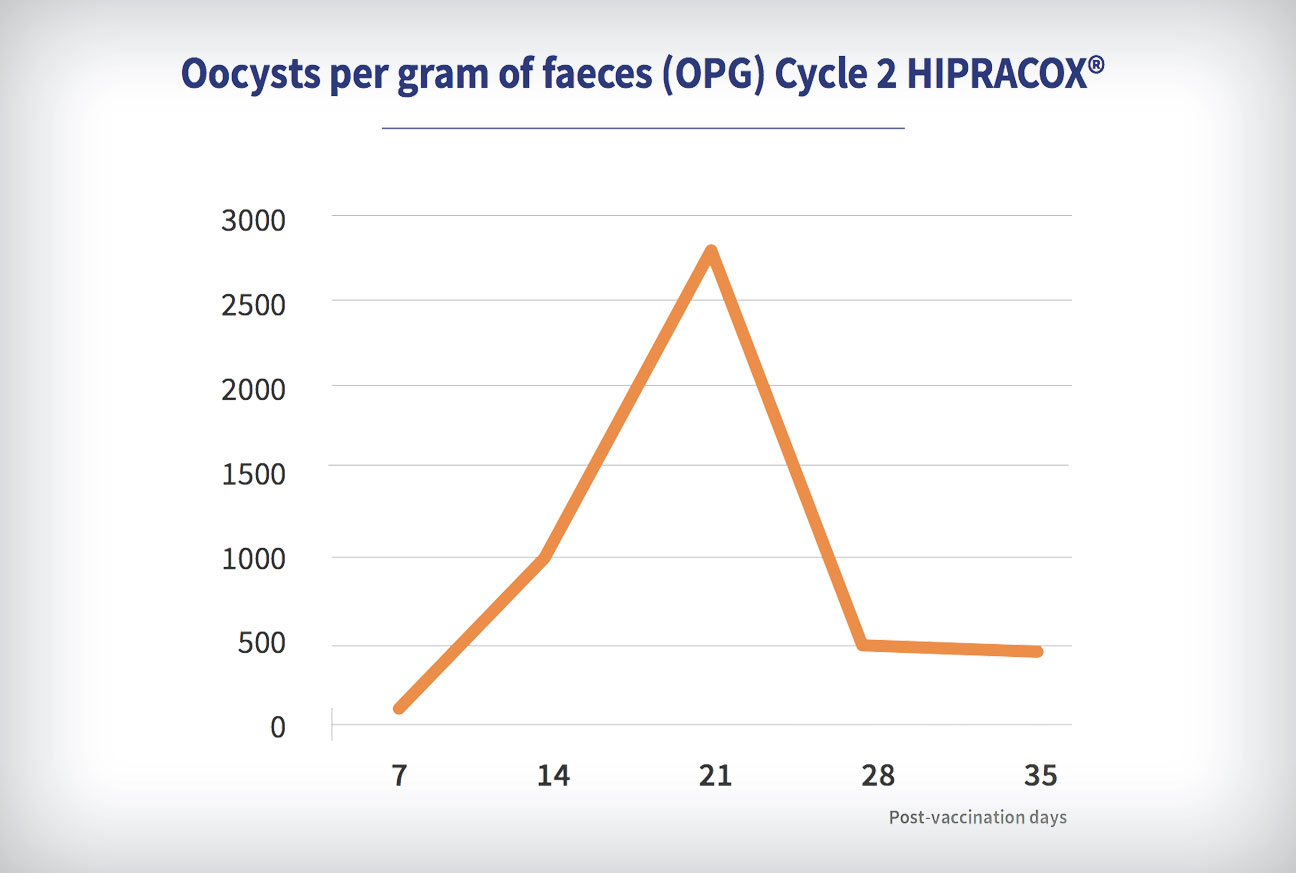 Coccidiosis in chickens: Oocysts per gram of faeces (OPG) Cycle 2