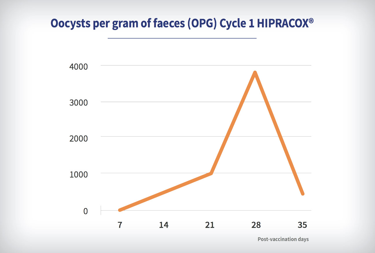 Coccidiosis in chickens: Oocysts per gram of faeces (OPG) Cycle 1