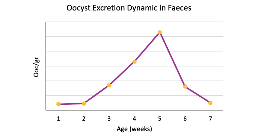 oocyst excretion dynamic in faeces