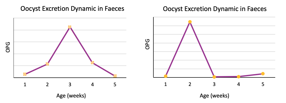 oocyst count: excretion patterns