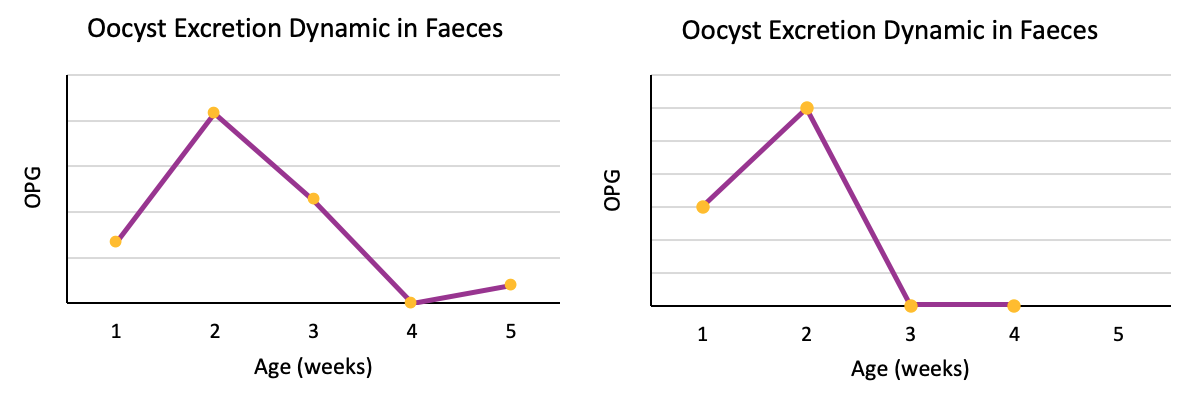 oocyst count: excretion dynamic in faeces
