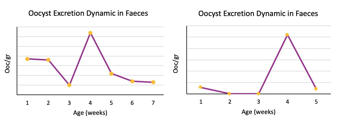 oocyst count: opg
