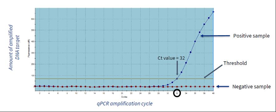 example qpcr