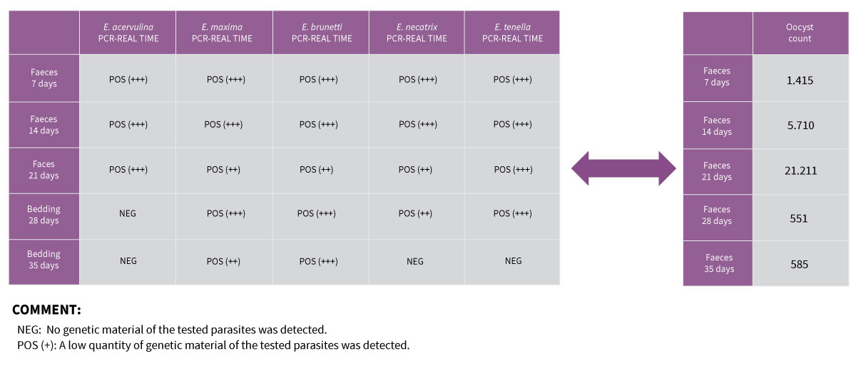 Coccidiosis in Chickens: Combination of 2 diagnostic techniques (qPCR & Oocyst Count -OPG-)