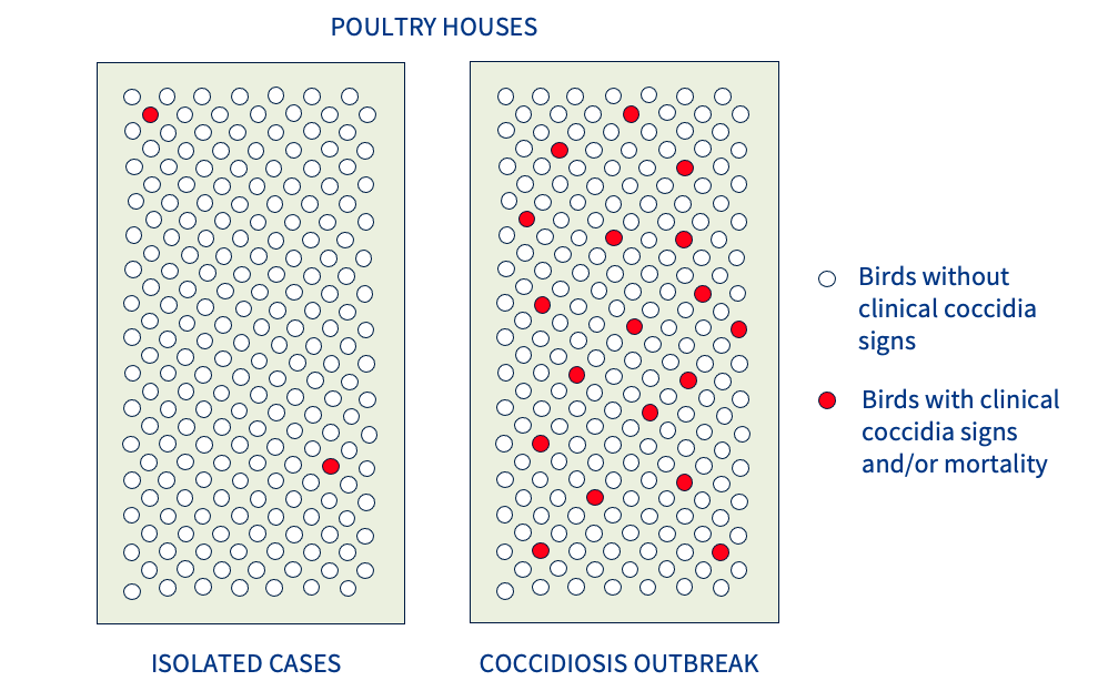 outbreak of coccidiosis table